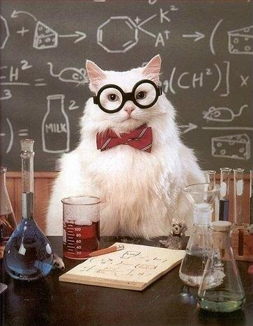 Chemistry Cat approves of this valuable contribution to science